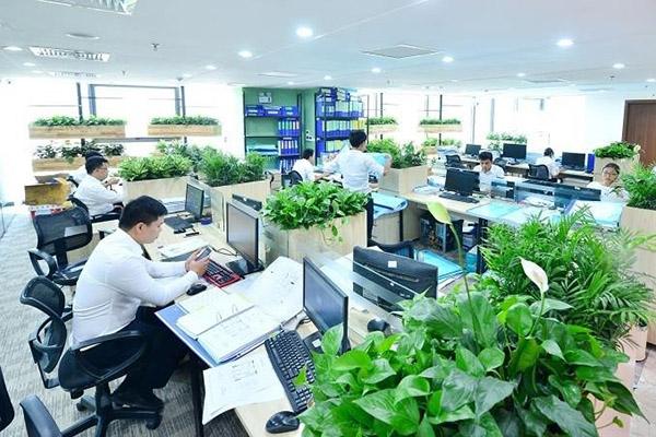 Doanh nghiệp có nên thuê cây xanh trang trí trong văn phòng của mình